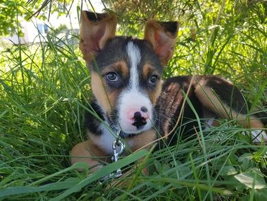 Очень красивый щенок в дар, фото 2