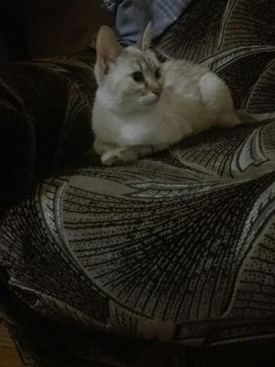ищу кошку, фото 2