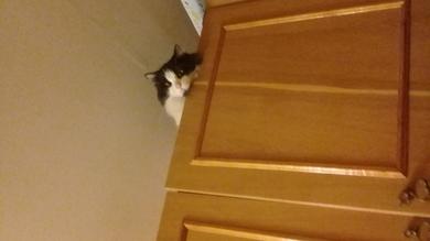 Котик швепс пропал или загулял , фото 2