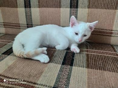 Котята в дар, фото 3