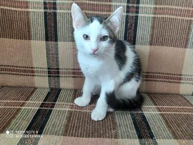 Котята в дар, фото 2