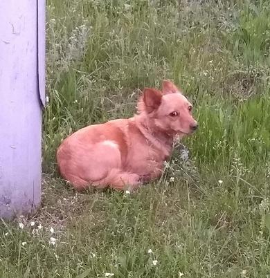 Собачка, ищет своего хозяина., фото 2