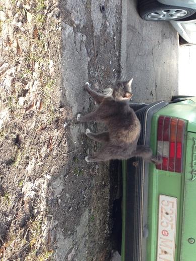Найден кот, фото 3