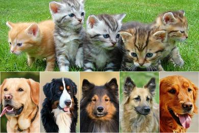 Выбираем клички для собак, котов и других животных