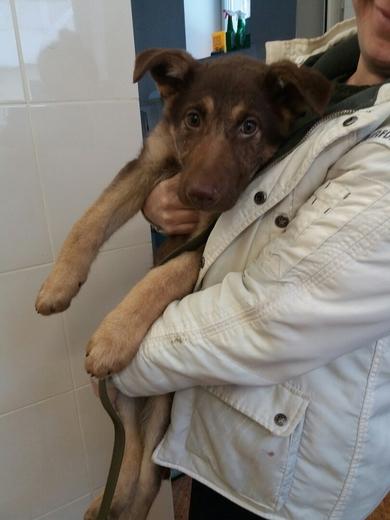 Красивый щенок в дар, фото 2