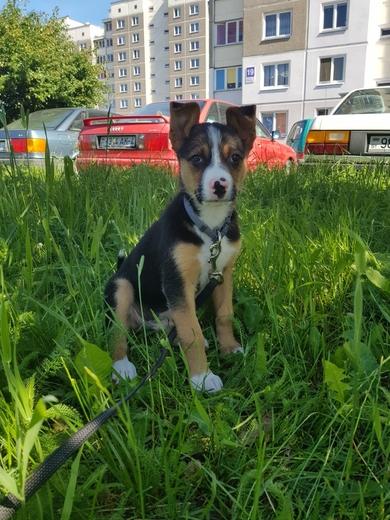 Очень красивый щенок в дар, фото 3