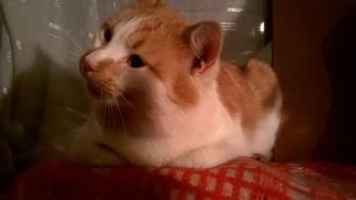 Найден кот, фото 4