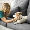 Как содержать животное в доме, где есть аллергик