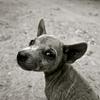 Что делать, если вы нашли на улице потерявшегося пса?